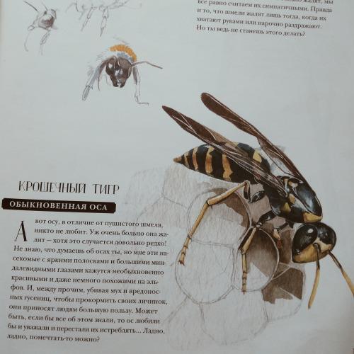 Музей живых насекомых 9